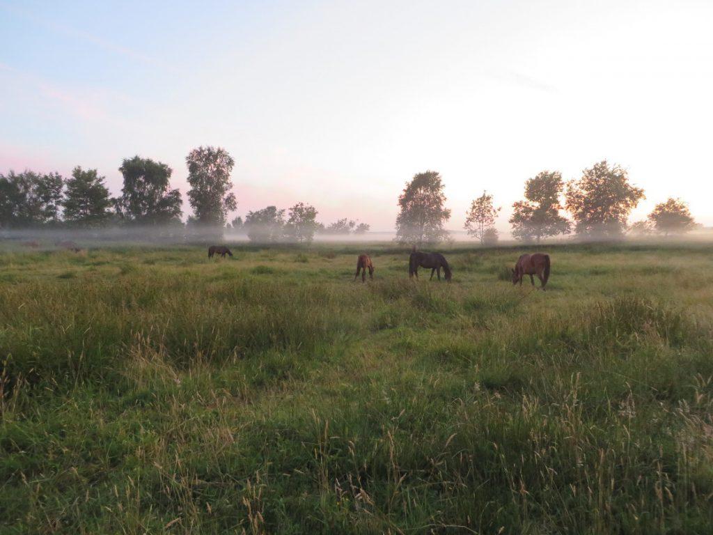 hestelaenkaer